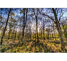 The Sunset Forest Photographic Print