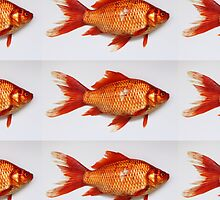 Goldfish Need Breaks Too by Kordial Orange by kordialorange