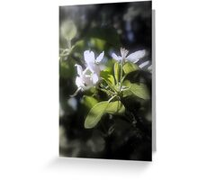 apple blossoms #6 Greeting Card