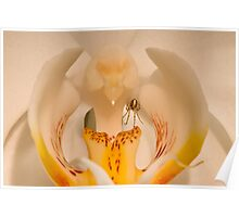 Spider Inside the Orchid Poster