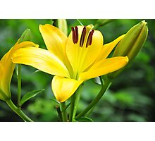 Lily Caress Photographic Print