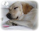 ~ Sweet Dreams ~ by Brenda Boisvert