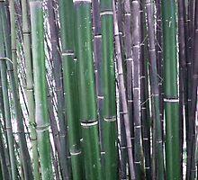 bambus 2 by Cincenetti