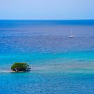 A Tree in the Sea by Roland Pozo