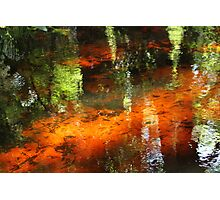 A florida stream Photographic Print