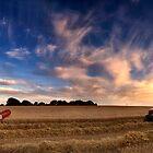 Harvesting barley, Norfolk, UK by Kathy Wright