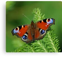 Beautiful Peacock butterfly Canvas Print