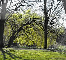 spring trees by rebecca metcalf
