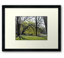 spring trees Framed Print