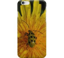 Spotted Cucumber Beetle on Dandelion  iPhone Case/Skin