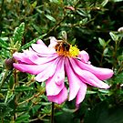 Busy Bee by Janette Anderson