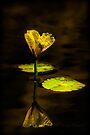 GLOWING REFLECTIONS by Sandy Stewart