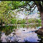 Audubon Lagoon by RayDevlin