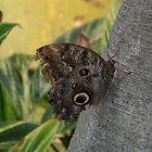 Butterfly Garden 1 by Krimsin