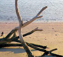 Beach Driftwood by Rosalie Scanlon