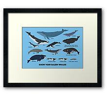 Know Your Baleen Whales Framed Print