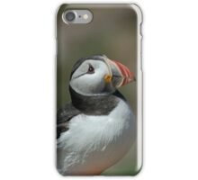 Pair of puffins iPhone Case/Skin