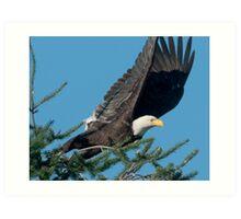 Bald Eagle Spots Its Prey Art Print