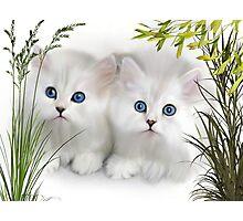 Kittens ..  Photographic Print