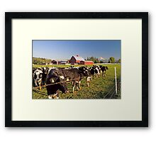 Dairy Cattle, Red Barn and Mount Rainier Framed Print