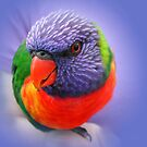 Rainbow Lorikeet by Ian Berry