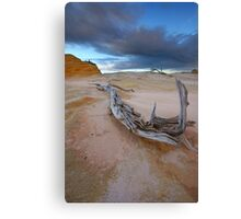 The Gnarled & Colourful World of Mungo Canvas Print