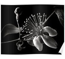 Guava in Black and White Poster
