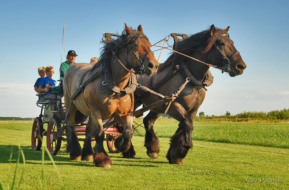 A ride with horses and cart by Adri  Padmos