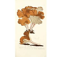Coloured figures of English fungi or mushrooms James Sowerby 1809 0481 Photographic Print
