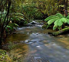 Lilydale Falls by Elaine Short