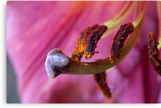 Lily Bits by Ray Clarke