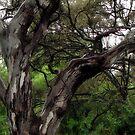 Gum tree in the rain by Terri-Anne Kingsley