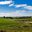 Peaceful Barossa Valley by Paul Thompson