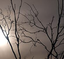 Trees at Menindee by Topher Webb