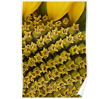 Flowers in a flower..(Sunflower) Poster