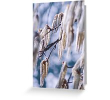 Lambs tails Greeting Card