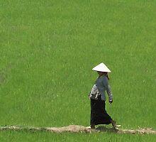 Vietnam - Riz à mère. by Jean-Luc Rollier