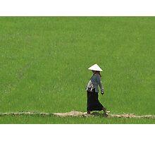 Vietnam - Riz à mère. Photographic Print