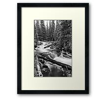 Pine Tree Forest Creek Portrait In Black and White Framed Print