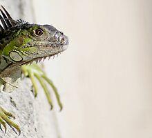 Iguana by Netsrotj