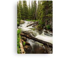 Pine Tree Forest Creek Portrait Canvas Print
