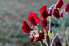 Red sweetpeas on a gray day by Antionette