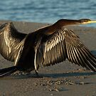 Darter (Snake Bird) by Jon Staniland