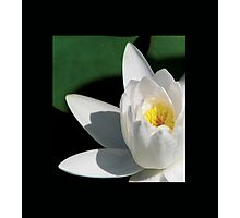 White Water Lily Close Up Photographic Print