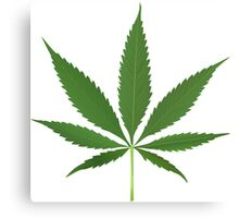 Cannabis leaf vector Canvas Print