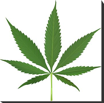 Cannabis leaf vector by Laschon Robert Paul