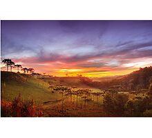 Araucaria Vale Photographic Print