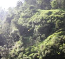 Spider of Merapi by Tim Coleman