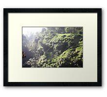 Spider of Merapi Framed Print