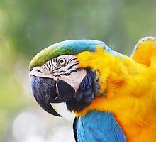Parrot by renatosaltori